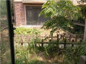 碧桂园三期中间位别墅,毛坯,154平方,不动产权证