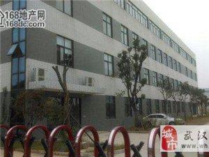 武汉沌口康师傅旁独栋2500m2钢构厂房配10T行