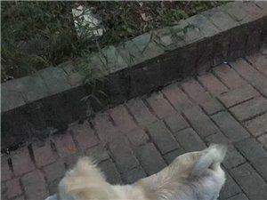 请帮忙找找我的狗狗