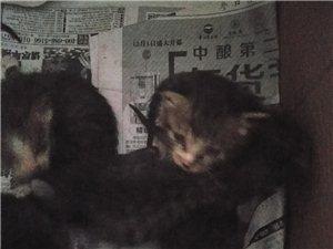 小貓求收養