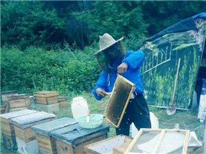 出售自己土蜂蜜