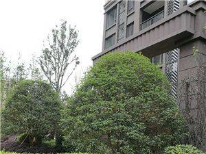 鸥鹏中央公园3室2厅2卫40万元.和开发商直接