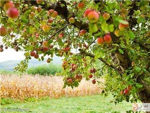 县城附近有三十亩九年果园对外承包,地理位置方便