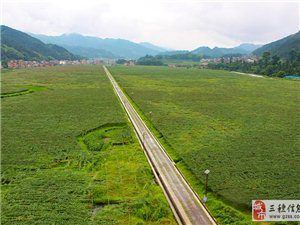 長吉貴秧農業園100萬斤葡萄正在熱銷
