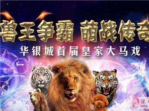 十一到華銀城看雄獅猛虎,懵、萌、猛、夢馬戲團等你喲