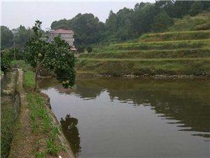 三十畝魚塘轉租,適合農家樂、垂釣!