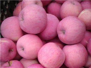 平涼靈臺縣朝那鎮蘋果大豐收色澤光亮香甜可口歡迎采購
