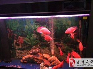 出售一米底濾森森魚缸和一個12厘米黃頭龜