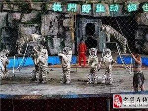 【宁国汽车站旅游专线】杭州野生动物园一日游