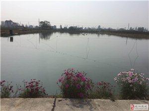 江口镇永收垸一组规整好鱼池和住房出售