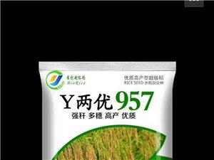 超级稻种 精品农药 新型肥料 无毒鼠药 苗木花卉