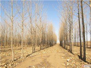 560畝林地出售可分割