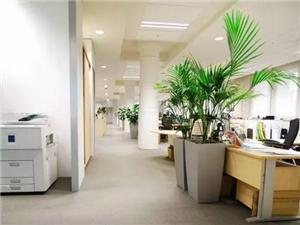 植物租摆及销售(植物美容师)