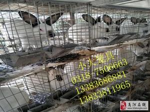 鸡鸽兔笼鹌鹑笼宠物笼鸽笼兔笼狐狸笼运输笼鸡笼鸽子笼