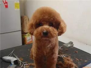 宠物洗澡修剪