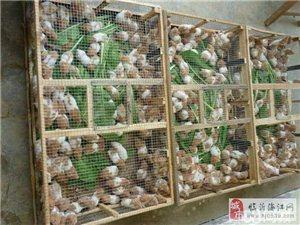 仓鼠繁殖基地,支持批发零售。主要销售品种:三线,紫仓,银狐,