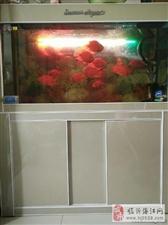 鹦鹉鱼清道夫