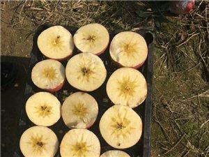 陜西渭南紙袋條紅紅富士蘋果批發價格