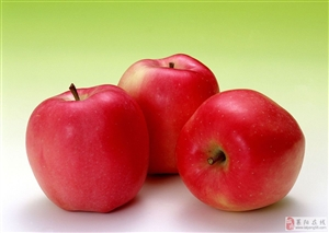 照旺庄1.5万斤苹果出售15725522723