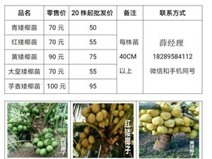 特价批发正宗泰国矮椰苗18289584112