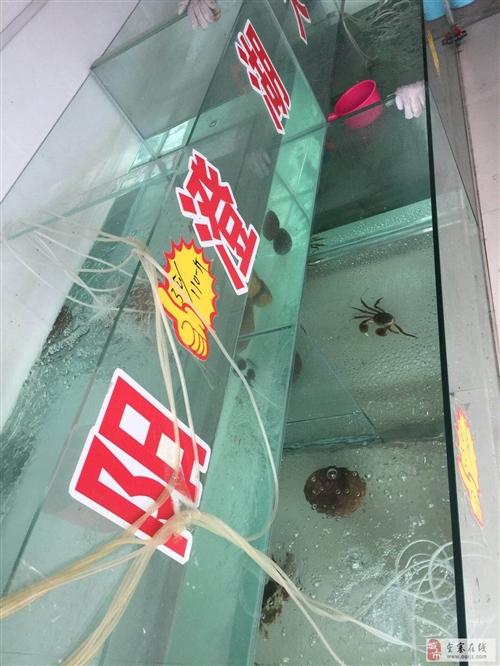 大型鱼缸出售。。。可做水产零售批发。