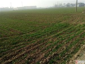 农村土地2.6亩,老人无法种地,12万澳门银河网址平台