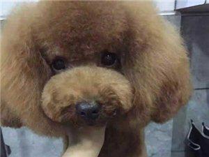 寵物洗澡美容師
