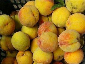 农家自制黄桃罐头