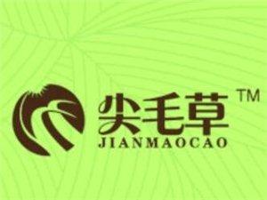 尖毛草竹浆生活用纸招商加盟