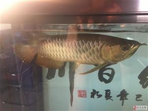 卖鱼卖鱼缸
