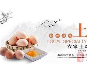 正宗土鸡蛋0.83元/枚起免费送货上门