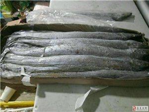 批發出售帶魚