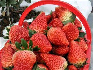 号外,号外!春节将至为答谢新老顾客草莓优惠活动开始啦!