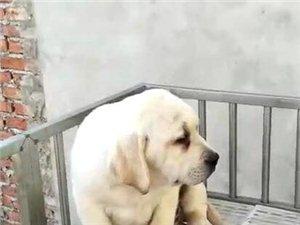 年前低价出售一只小狗狗,要的速度!