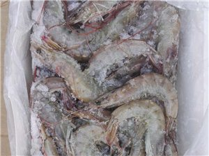 青岛冰鲜大青虾 每盒四斤 按盒卖 县城内可送货