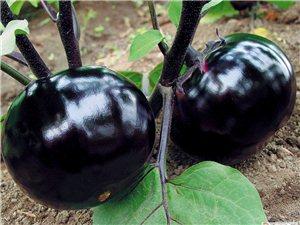 大量批發銷售蔬菜