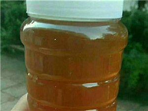 純正土蜂蜜
