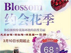 赏千亩红梅、逛龙泉古镇3月10日长阳起止68元/人