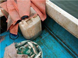 專賣各種本地野生海鮮,皮皮蝦,梭子蟹,牡蠣