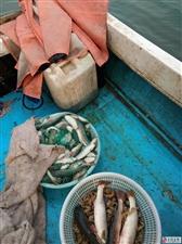 专卖各种本地野生海鲜,皮皮虾,梭子蟹,牡蛎