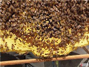 长阳李先生蜂蜜出售