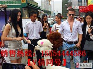 南京海狮表演出租项目海狮表演互动吸引人气