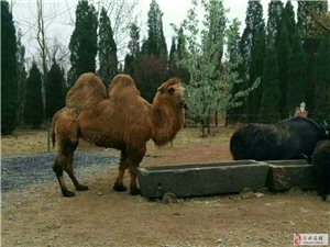4月7日济南野生动物园一日游