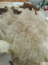 羊皮低价出售