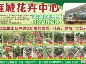 雍城花卉中心特优惠推出各种质优价廉的盆景、花卉、绿植……