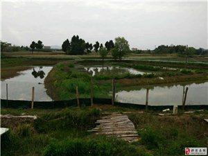 10亩龙虾养殖场转让