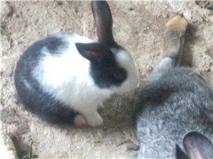 宇龙兔业原生态兔子惊爆来袭