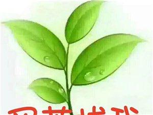 品一幽香好茶;交一知心朋友;买茶加微信18236932045