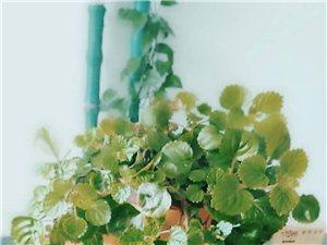 个人出售绿色植物、花卉