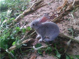 宇龙原生态兔业欢迎各位光临